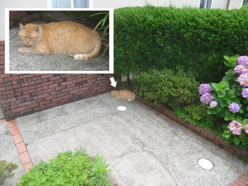 ネコ発見! その3 。