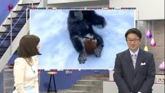 久冨慶子アナのパンツ透け透け画像5