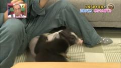 瀧本美織志村動物園胸チラ画像6