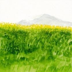 菜の花と金山