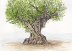 いもあられの、、、千年の大樹