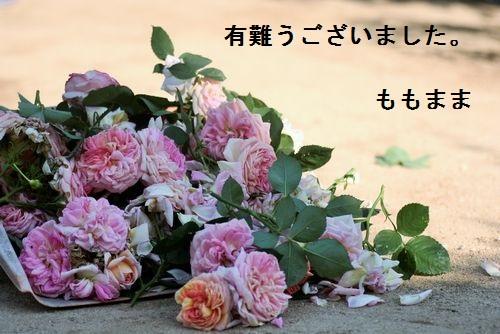 _MG_3177.jpg