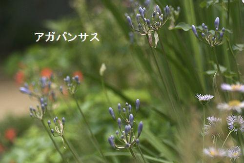 _MG_3637.jpg