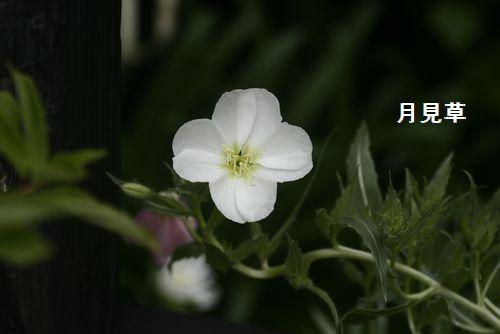 _MG_3641.jpg