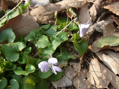 「小さい春1~北本自然観察公園(1)」