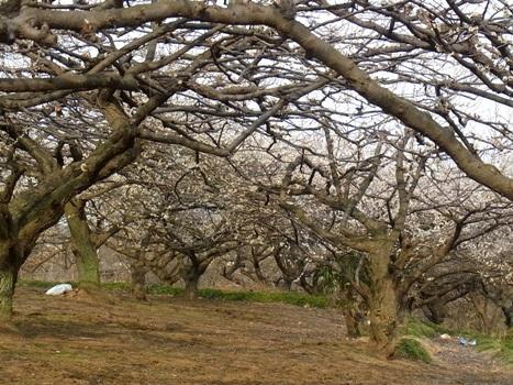 きれぎれの風彩 「小さい春3~北本自然観察公園」11