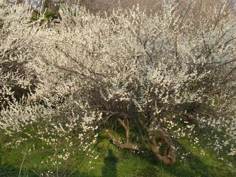 きれぎれの風彩 「小さい春3~北本自然観察公園」12