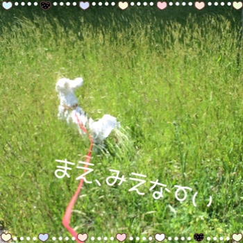fc2blog_20150523212954b10.jpg