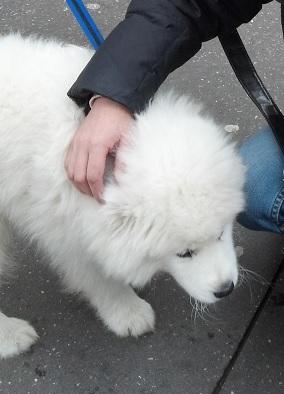 white dog 3