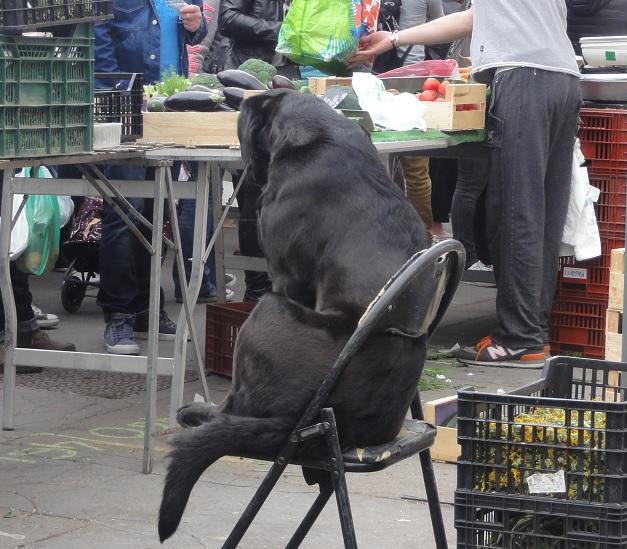 marché dog 1