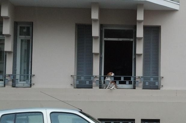 dog waiting 1