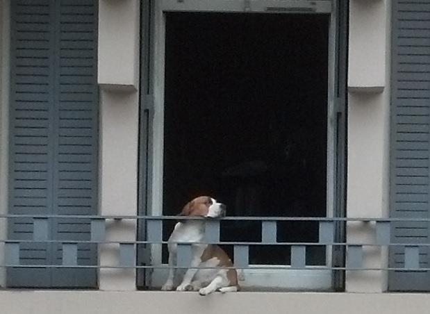 dog waiting 2