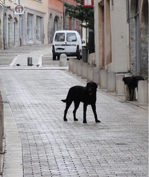 dog1_20150120035349d88.jpg