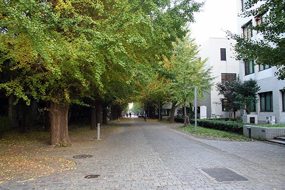 東京大学駒場キャンパス 春の校内