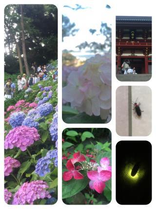 image1+(2)_convert_20150617124232.jpeg