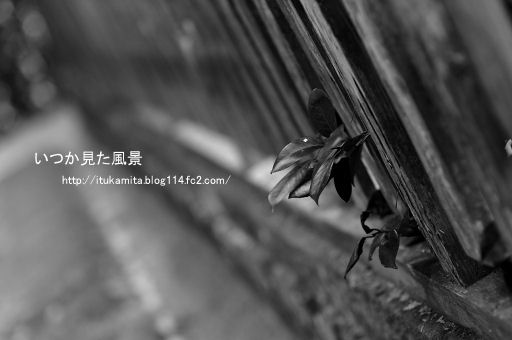 DS7_5301wi-ss.jpg
