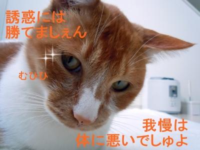 028_20150124200302d2b.jpg