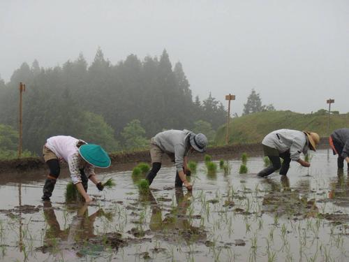 横尾棚田の田植え3人娘2015