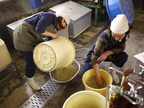 味噌づくり2015-3日目大豆洗う