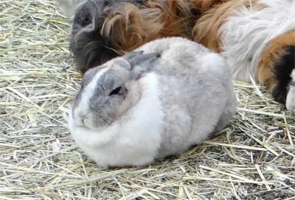 ウサギが目を開けたまま寝る理由