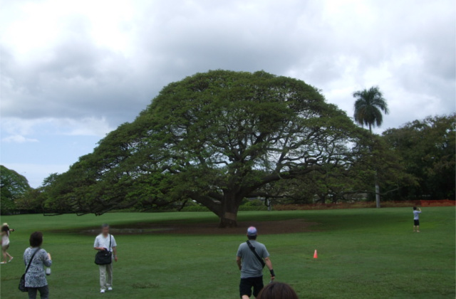 「この木なんの木気になる木」ってどこにあるの?
