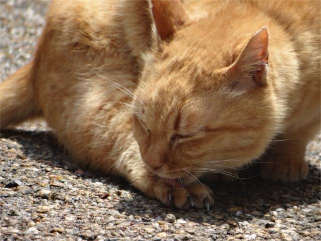 クラシック音楽を聴くと猫もリラックスしている?