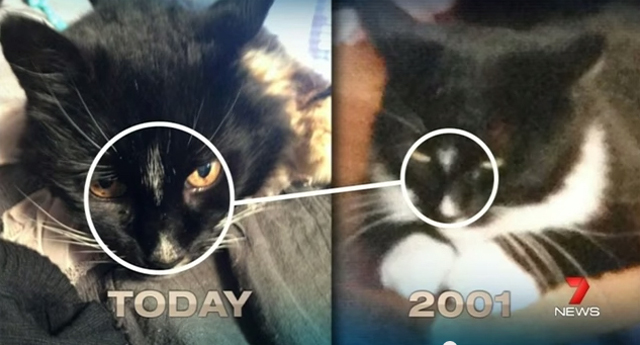 奇跡の再会!行方不明だった黒猫が13年ぶりに帰宅(オーストラリア)