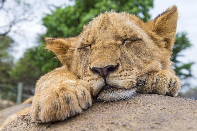 寝ている時に「ビクッ」となる現象の名前
