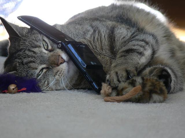 公衆電話は昔、使い放題だった!