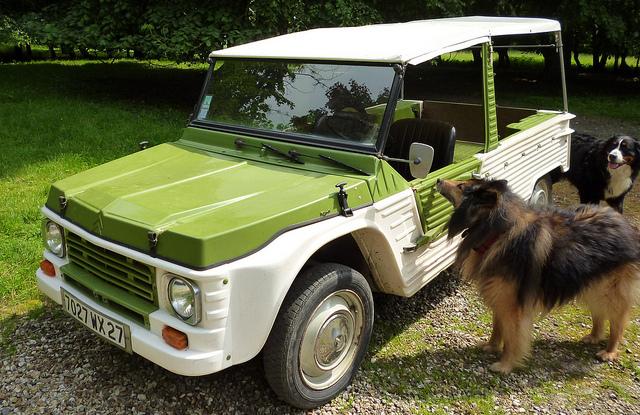 犬は何頭まで車に乗ってもいいのか