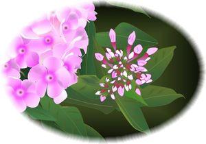2014-05-02 紫陽花
