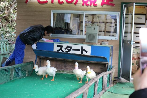 2014北海道旅行:のぼりべつクマ牧場 アヒル4