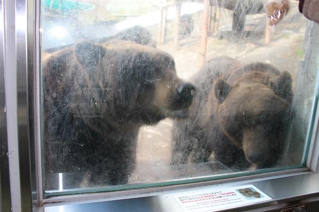 2014北海道旅行:のぼりべつクマ牧場 人のオリ2