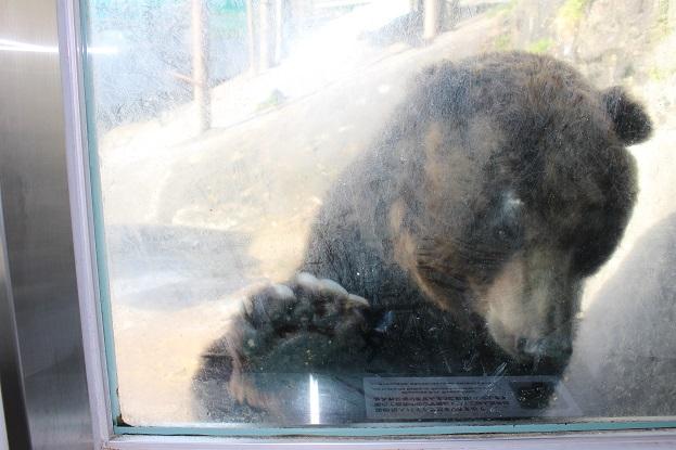 2014北海道旅行:のぼりべつクマ牧場 人のオリ4
