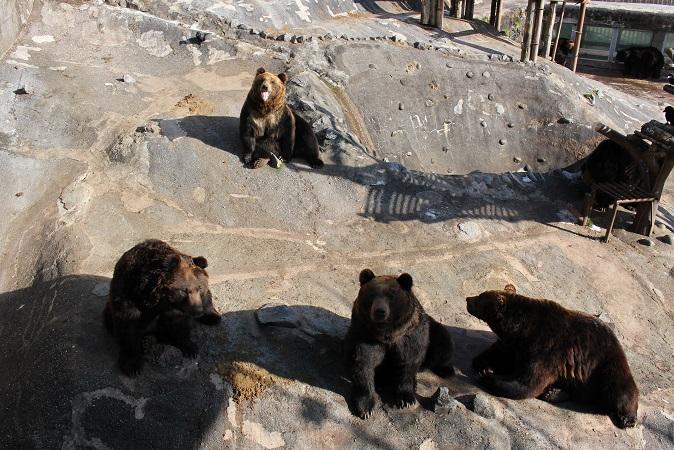 2014北海道旅行:のぼりべつクマ牧場 ヒグマ メス