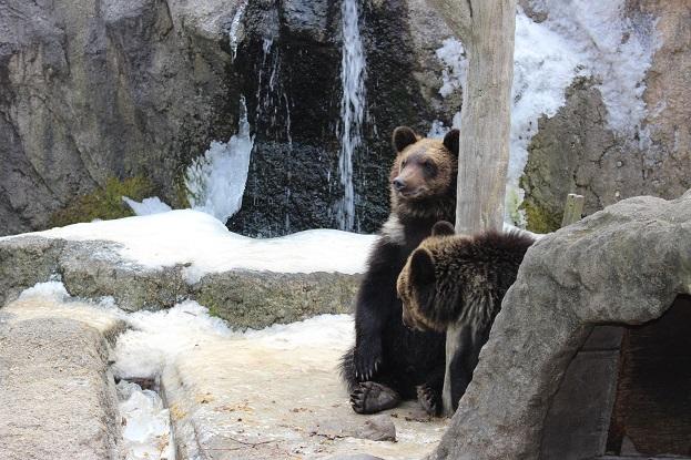 2014北海道旅行:のぼりべつクマ牧場 ヒグマ 子