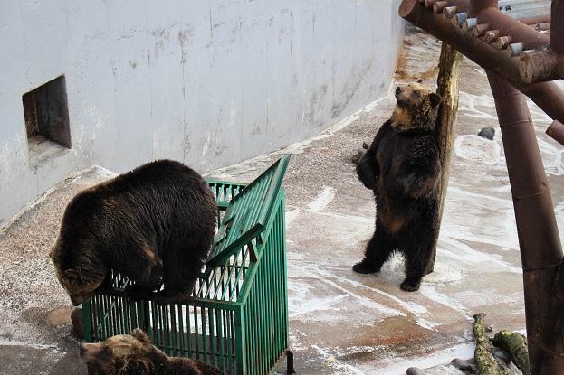 2014北海道旅行:のぼりべつクマ牧場 クマの実験