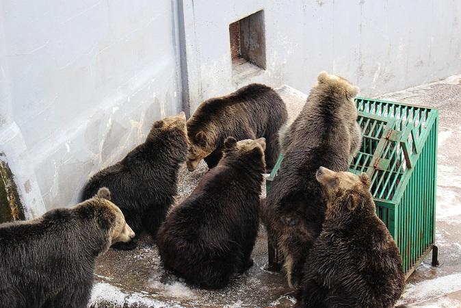2014北海道旅行:のぼりべつクマ牧場 クマの実験4