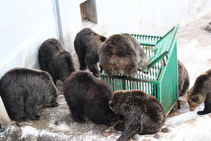 2014北海道旅行:のぼりべつクマ牧場 クマの実験5