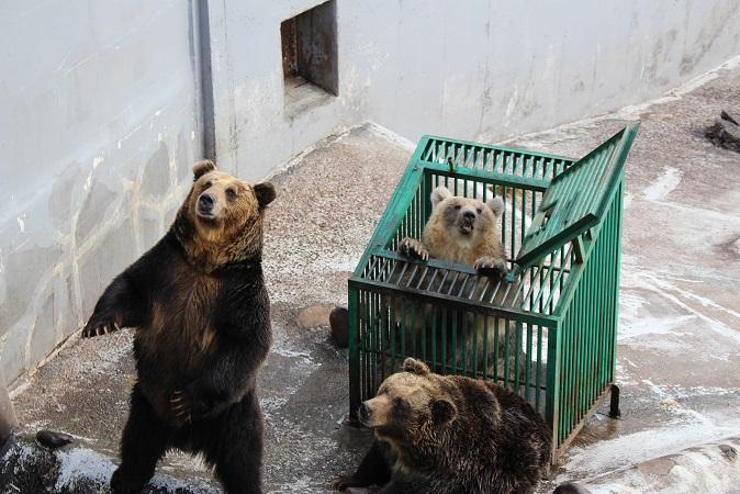 2014北海道旅行:のぼりべつクマ牧場 クマの実験7