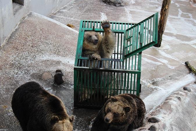 2014北海道旅行:のぼりべつクマ牧場 クマの実験8