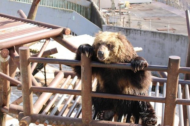 2014北海道旅行:のぼりべつクマ牧場 スリッパ