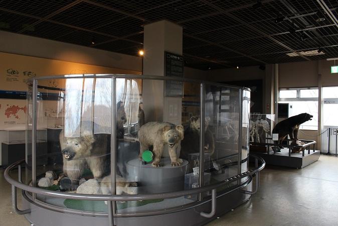 2014北海道旅行:のぼりべつクマ牧場 ヒグマ博物館2