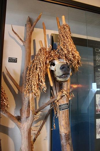 2014北海道旅行:のぼりべつクマ牧場 ヒグマ博物館3