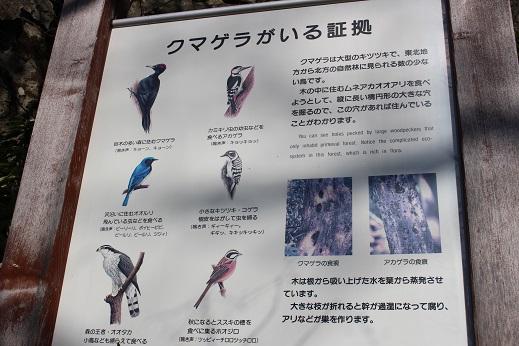 2014北海道旅行:登別温泉 国立公園 クマゲラ