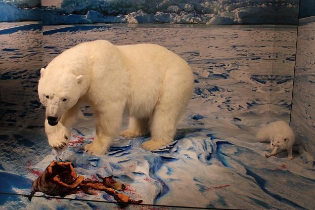 2015カナダ:0210イエローナイフ 博物館 シロクマ