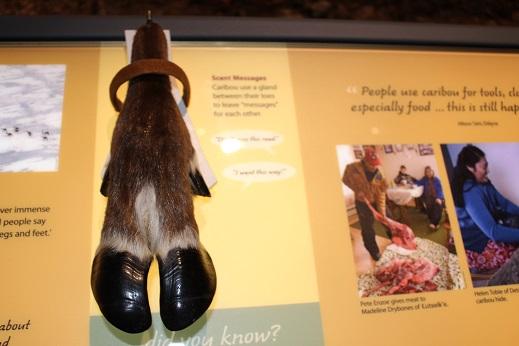 2015カナダ:0210イエローナイフ 博物館 蹄