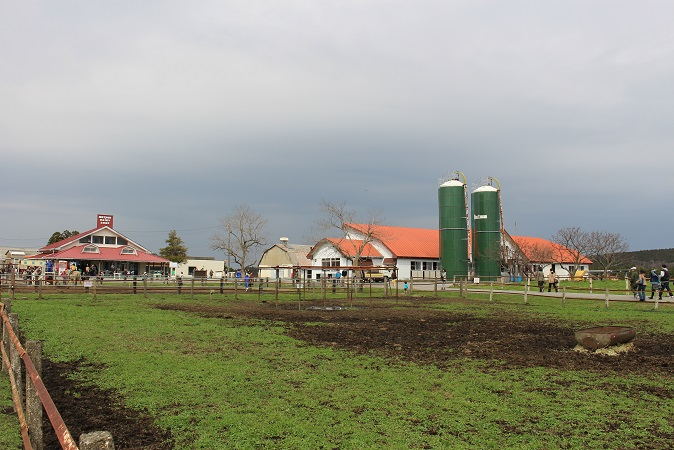 マザー牧場:うしの牧場