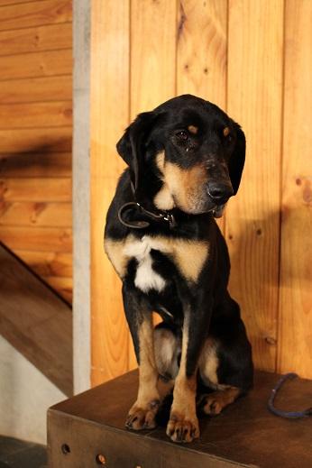 マザー牧場:シープショー 犬