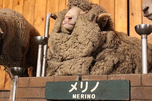 マザー牧場:シープショー 羊 メリノ